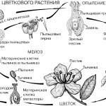 кожи ботаника в таблицах схемах тестах и терминах стороны
