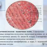 Гистологическое строение мышечных тканей