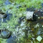 Эвтрофикация — водоем